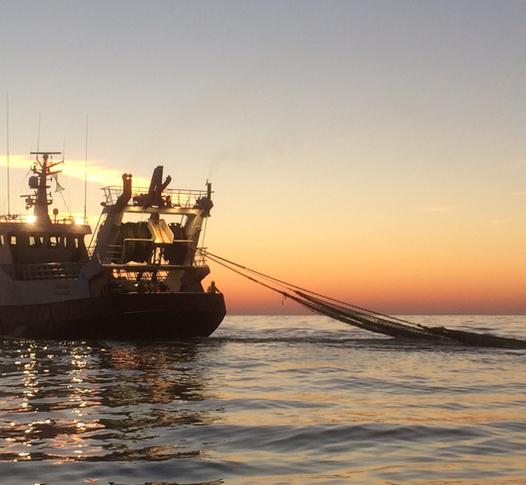 Van Seters Zeevisserijbedrijf